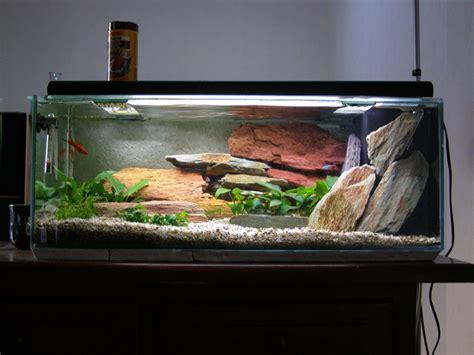 Merveilleux Decor Aquarium Pas Cher #1: photo-aquarium-décoration-aquarium-pas-cher-9.jpg