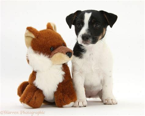 mascotas para pisos peque os mascotas peque 241 as 191 cu 225 les se adecuan a un departamento