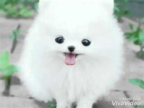 imagenes de perritos kawaii perritos kawaii youtube