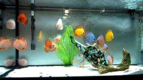 Aquascape Designs For Aquariums My Discus Fish Tank Update Youtube
