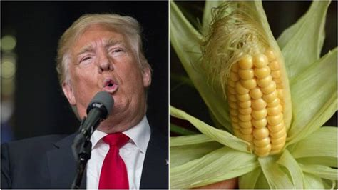 corn husk doll cursed by a witch donald s hair described in 100 ways