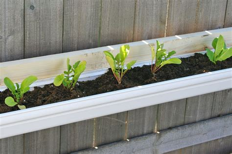 Gutters As Planters by Vegetable Garden Borealis