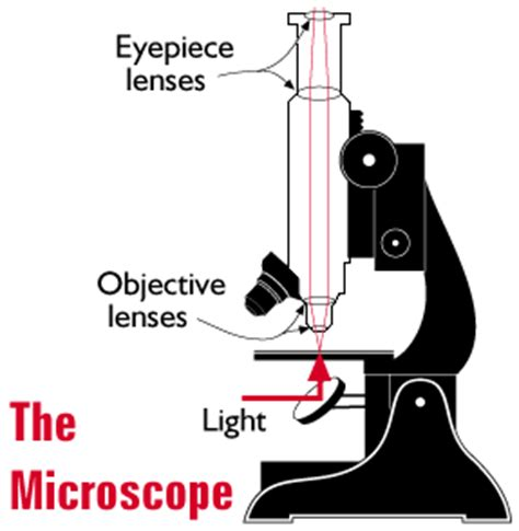 how does a light microscope work how microscopes work thinglink