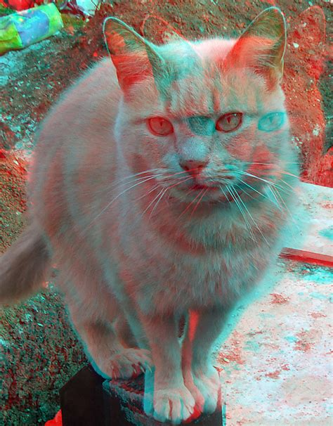 wallpaper cat 3d glasses cat 3d anaglyph red blue glasses to view a photo on