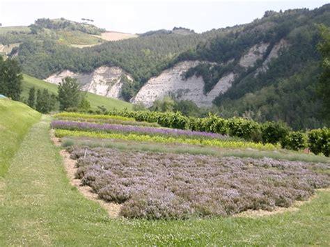 giardino delle erbe sistema museale della provincia di ravenna giardino