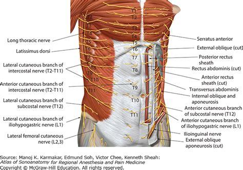 Lumbar Muscle Anatomy