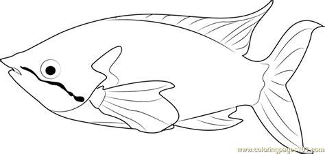 rainbow fish coloring page pdf rainbow fish pdf gidiye redformapolitica co