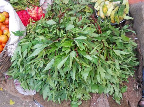sorrel color sorrel leaves aadhya empowering