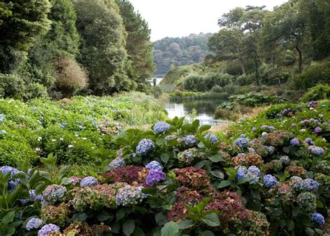 Garden Cornwall Top 10 Gardens Best Of The Cornwall Guide