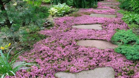 the best flowering ground cover plants to beautify your garden