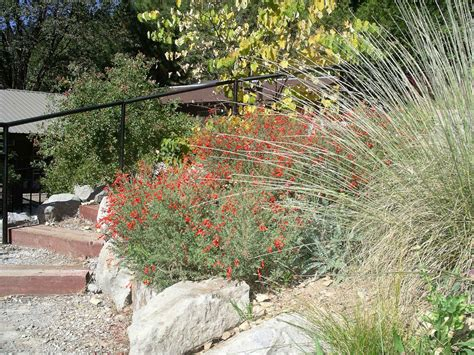gardening with california plants the real dirt