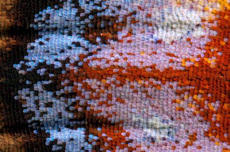 tappeto colorato juzaphoto