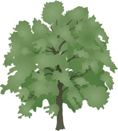 trees symbolism ألبومات صور منوعة البوم صور اشجار كبيرة عالية مفرغة