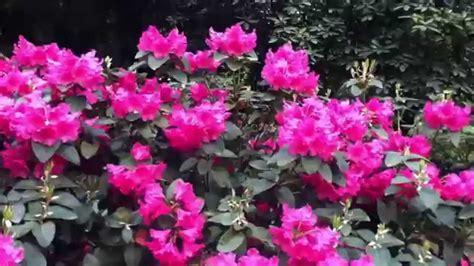 imagenes de flores preciosas flores preciosas las mejores del mundo est 225 n en alemania