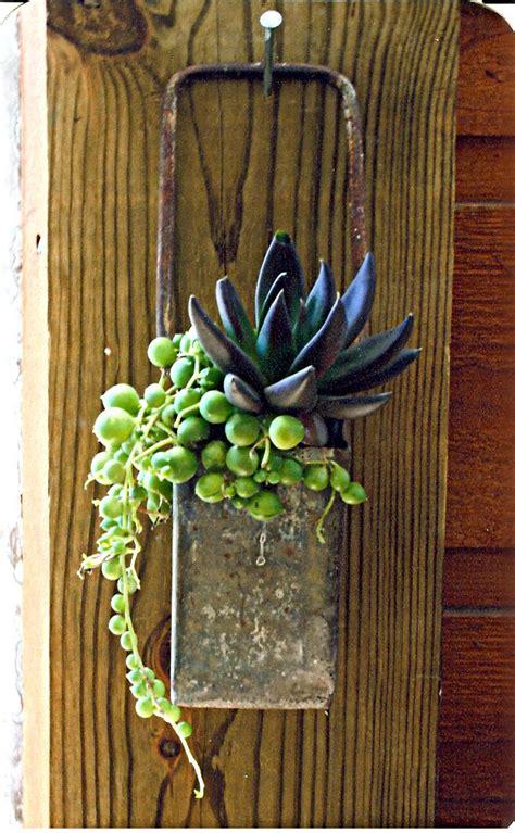 succulents great container suculentas pinterest