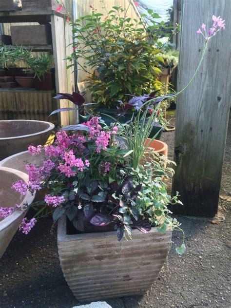 container gardening design container gardening design tips oak garden shop