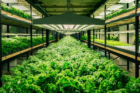 indoor grow supplies colorado springs this factory now of fish and kale is