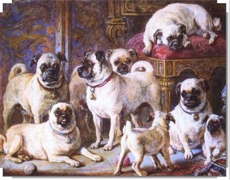 ancient pug pug history pug club of america