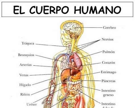 imagenes asombrosas del cuerpo humano laminas cuerpo humano spanish pinterest spanish and