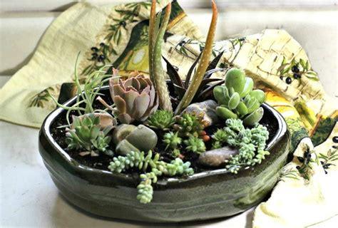 diy succulent arrangement dish garden centerpiece