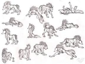 wolf tala sketches by stangwolf on deviantart