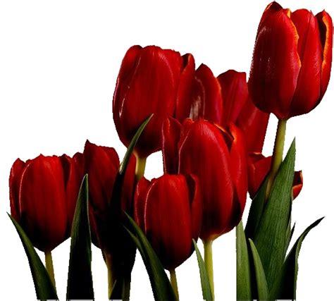 Masker La Tulipe fleurs tulipes rouges