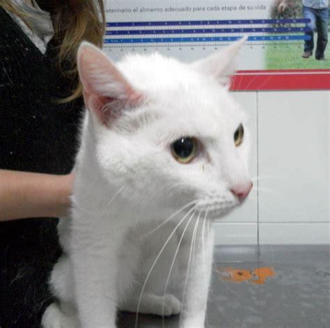 mi gato mi perro c 243 mo actuar frente a una hemorragia en mi perro o mi gato