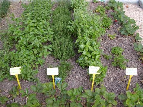 herb garden ashwini ahuja author blog