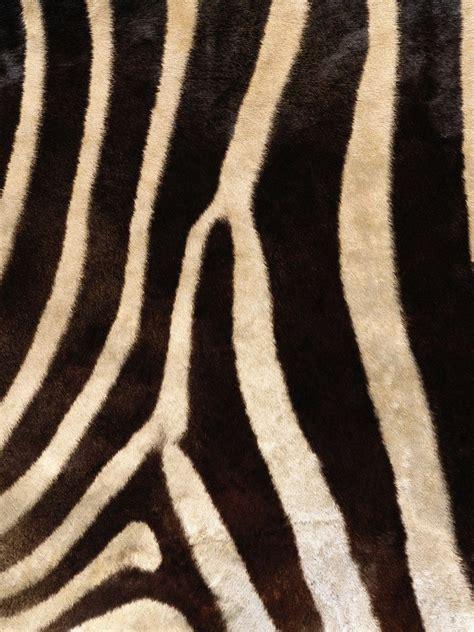 zebra pattern meaning backgrounds zebra skin pattern background ipad iphone
