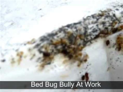 bed bug bully at work flv youtube