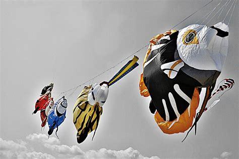 pesci volanti pesci volanti foto immagini noi e il mare soggetti