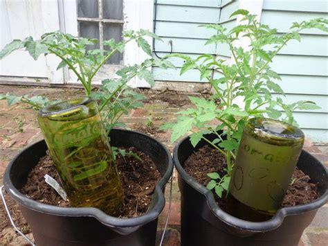 starting  vertical garden homesteading