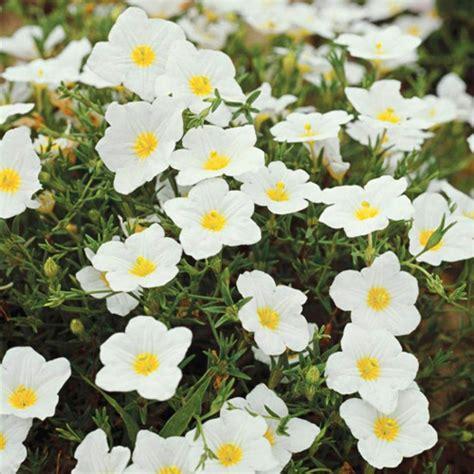 Die Sch Nsten Balkonpflanzen 3395 by Blumen F 252 R Volle Sonne Blumen F R Die Sonne W Hlen Tipps