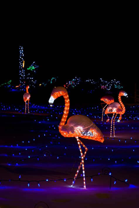 Zoo Lights Calgary Zoo Lights Calgary