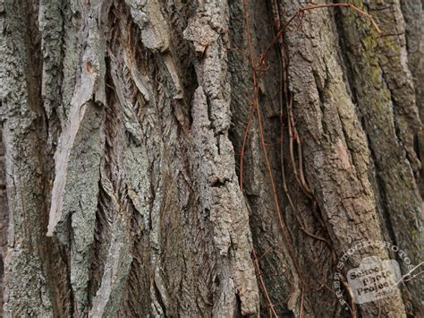 tree bark free stock photo image picture pine tree bark texture pattern royalty free