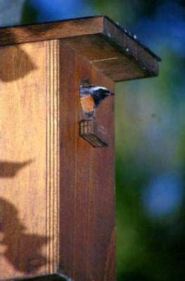 cassette nido quaderni di birdwatching nidi artificiali codirosso