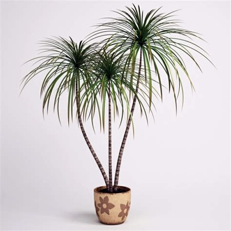 best plants for dark rooms indoor plants suitable for dark rooms interior design