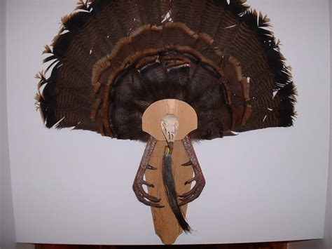 how to mount a turkey fan diy turkey fan mount montana hunting and fishing