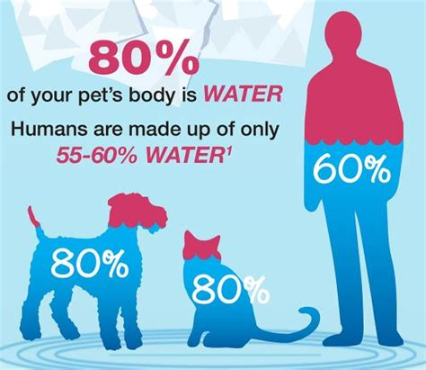 hydration percentage pet hydration awareness month why now petsafe 174 articles