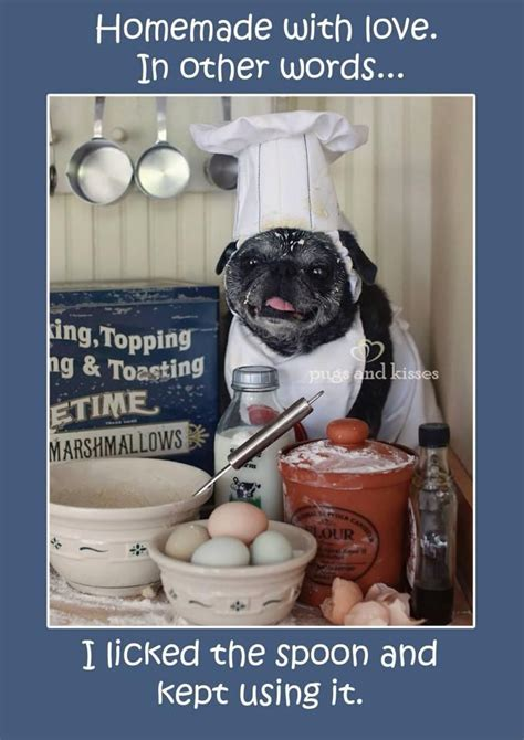 words ending with pug 2286 best pugs images on doggies pug dogs and pugs