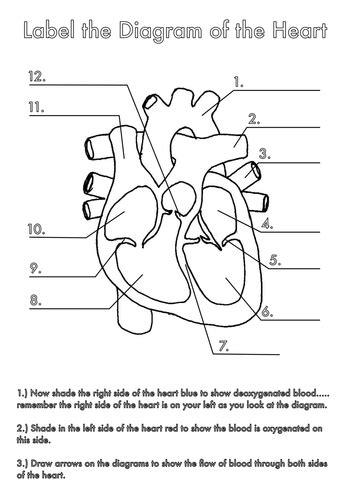 biology diagrams pdf four human biology diagrams to label lungs