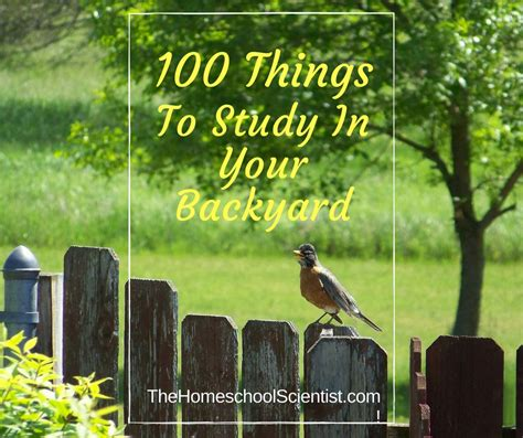 things in a backyard 100 things to study in your backyard the homeschool