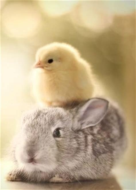 cute rabbits and chicks bunny and chick easter pinterest