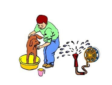 when can you give puppies a bath dogs lesson for esl page 2