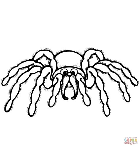 spider coloring pages spider coloring page free printable coloring pages