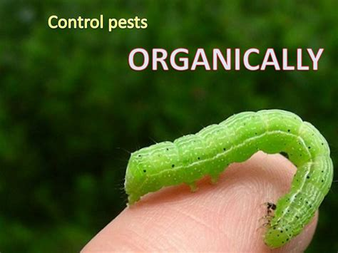 organic garden pest organic garden pest solution to put the insects