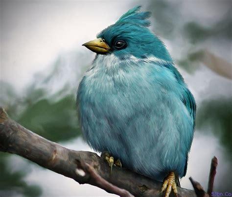 imagenes realistas con nombre del autor have a look to the real birds of angry birds game