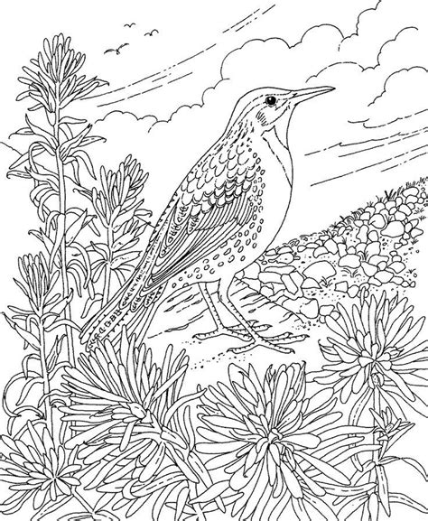 Montana State Bird Coloring Page