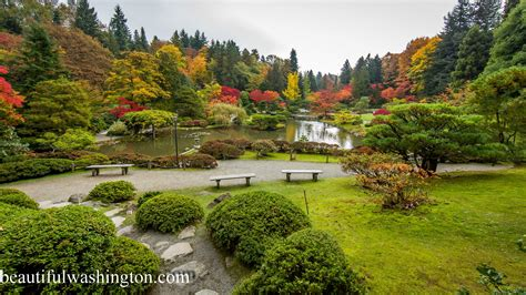 Gardens In Seattle by Seattle Recreation And Attractions Museums Parks Hiking