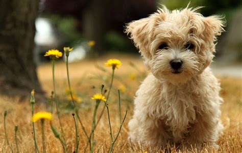 dogs and personalities temperament and personality of poodle dogs many